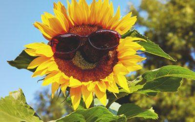 7月の営業案内と日焼け止めのご紹介